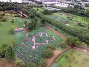 05古代ハスの池が3つある.jpg