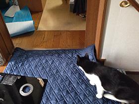 オーブンレンジ交換 01 猫が警戒.jpg