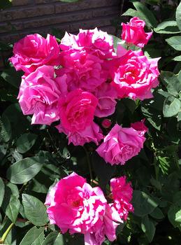 ゼフィリンドルーアン2015 花束.jpg