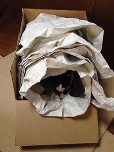 パッキング猫01.jpg