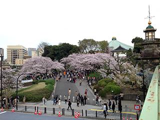 千鳥ヶ淵の夜桜 01 明治大学入学式.jpg
