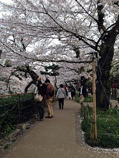 千鳥ヶ淵の夜桜 05 人が少ない.jpg