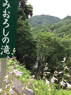 天城湯ヶ島22 捕1 浄蓮の滝 みおろしの滝.jpg
