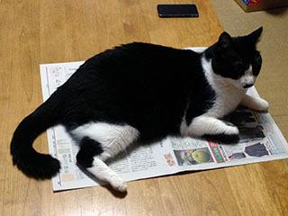 新聞を読ませない猫 02 そこをなんとか 僕に関係ない.jpg