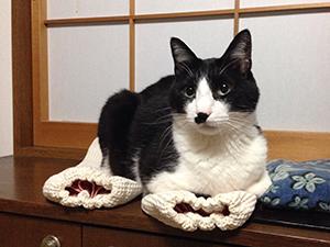 猫アーマーが下敷き 01 座布団として評価(^_^;).jpg