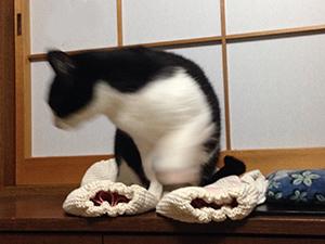 猫アーマーが下敷き 02-1 ぷいっ.jpg