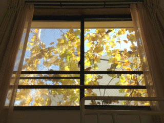 窓からブドウ(秋)-1.jpg