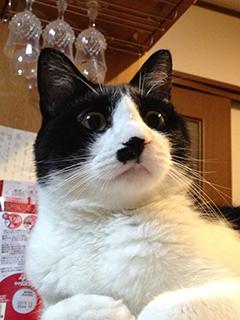 訳知り顔の猫 振り向く.jpg