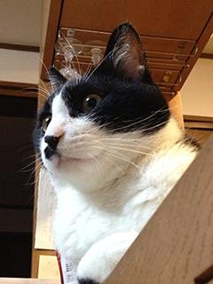 訳知り顔の猫 遠くを見る.jpg