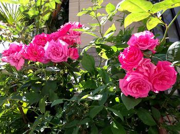 ゼフィリンドルーアン2015 花束2つ.jpg