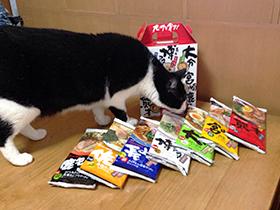 マルタイラーメン九州を食す 02 猫が見に来た.jpg