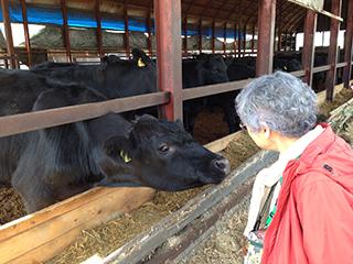 北海道旅行 デントコーン 03 母とアンガス牛.jpg