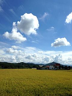 北海道旅行 デントコーン 16 そして旭山動物園へ.jpg
