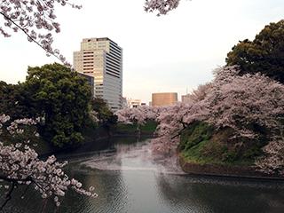 千鳥ヶ淵の夜桜 02 夕日のあたるビル街.jpg