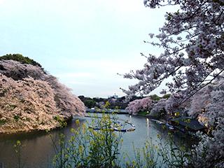 千鳥ヶ淵の夜桜 11 ボート乗り場.jpg