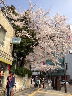 外濠公園の桜 市ヶ谷交番前.JPG