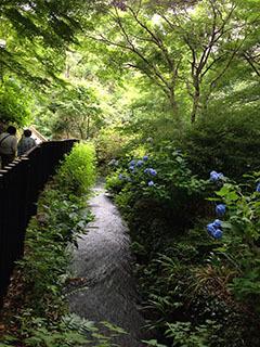天城湯ヶ島07 捕1 男橋から女橋へ.jpg