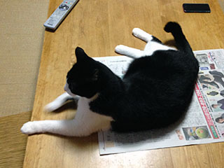 新聞を読ませない猫 03 はあ、どっこいしょ.jpg