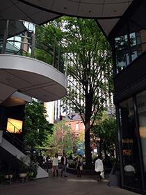 東京駅中 13 ビルに囲まれた庭園.jpg