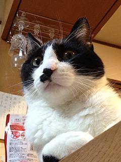 訳知り顔の猫 考える.jpg